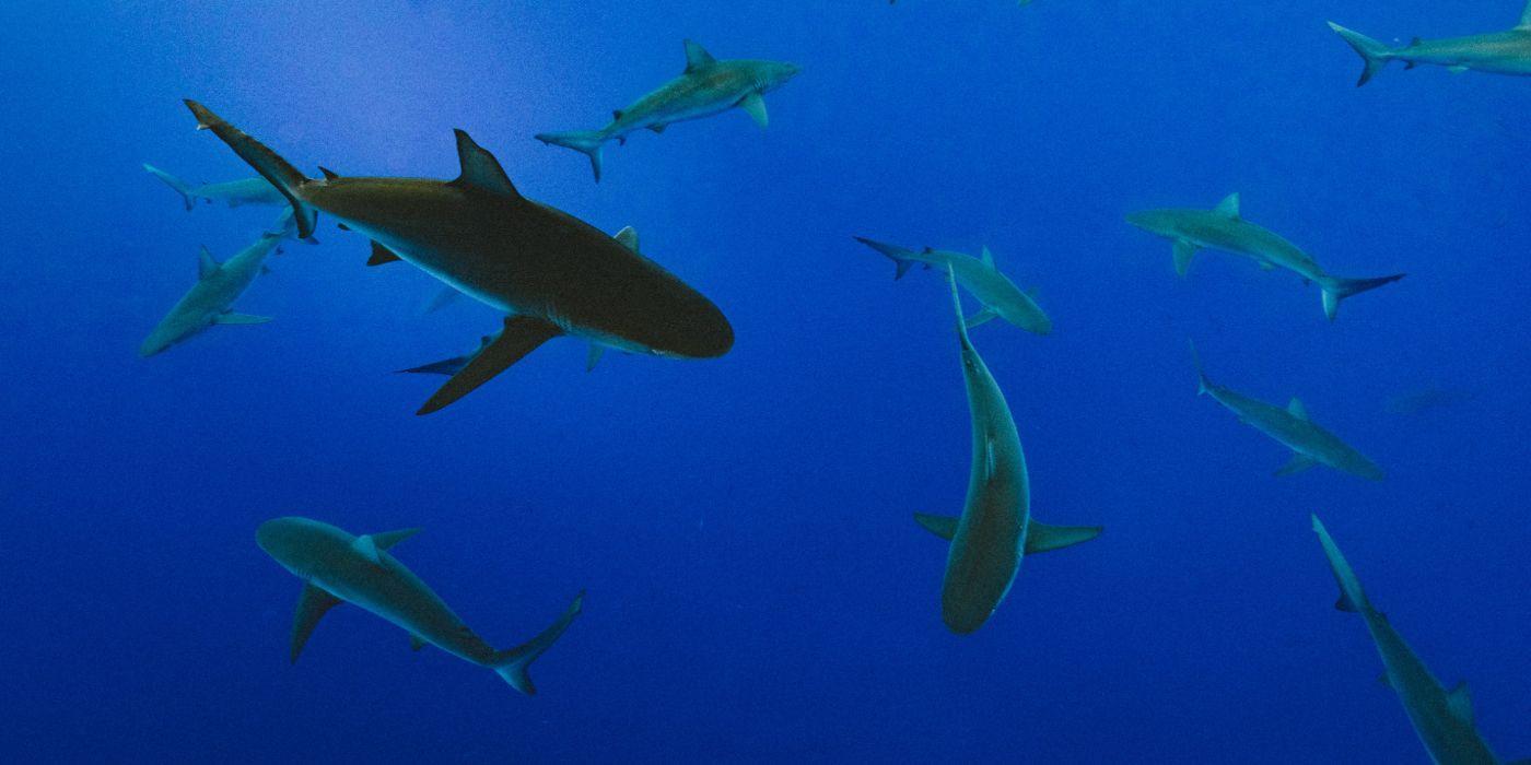 shark week 2020 - photo #21