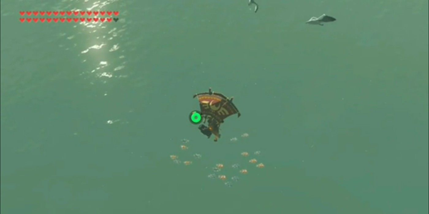 The wild player's breath uses seagulls to find better places to fish